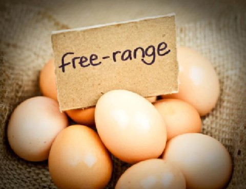 our-own-free-range-eggs